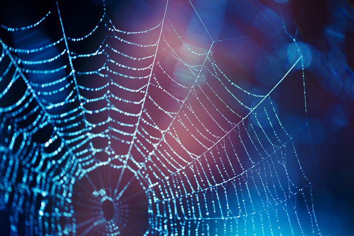 spider web symbolizes the cycle of addiction and mental health issues faced by those in mental health programs
