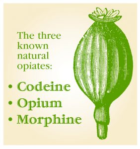 the three known natural opiates- codeine, opium, morphine graphic with plant bud